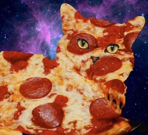 Cat Dating Profile Pepperoni Express Pizzeria